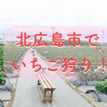 「北広島市でいちご狩り」を楽しもう!お得な料金が嬉しい!3歳未満は無料