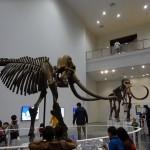 子どもといっしょに楽しく学ぼう!北海道博物館の魅力を徹底紹介!|札幌