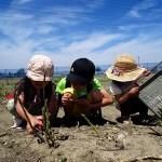 気軽に収穫体験するならここ!サッポロさとらんど|札幌