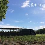 遊具が充実!四季折々の花!リリートレイン!百合が原公園の紹介|札幌
