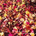 【決定版】札幌の紅葉スポット13選!子どもと一緒に彩りの世界へ|札幌