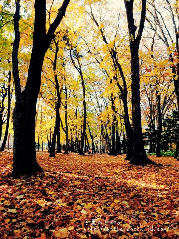 隣接する円山公園