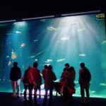 新千歳空港近くで観光するならここ!「サケのふるさと千歳水族館!」子連れにも