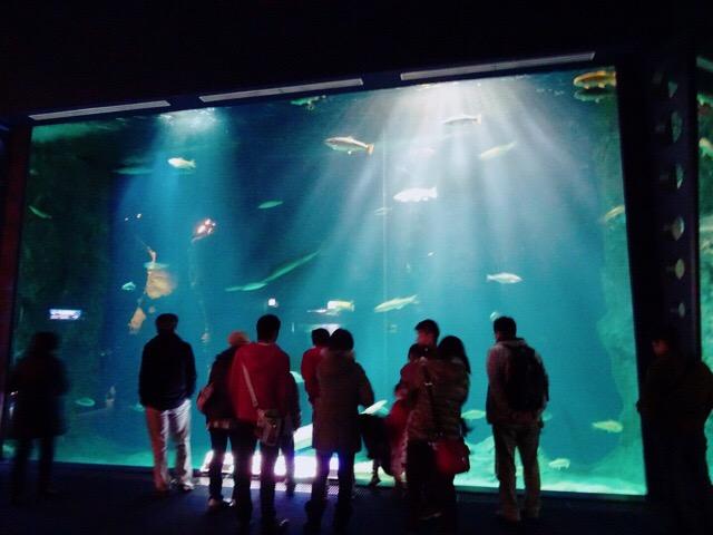 さけのふるさと 千歳水族館