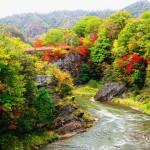 夕張 滝の上公園の紅葉 色づき始めました!