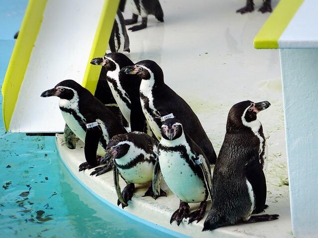ショーの間も自由すぎるペンギンさんたち