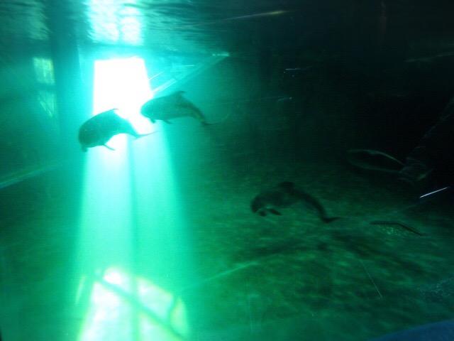 イルカのプールに光が差し込む、「奇跡の時間」