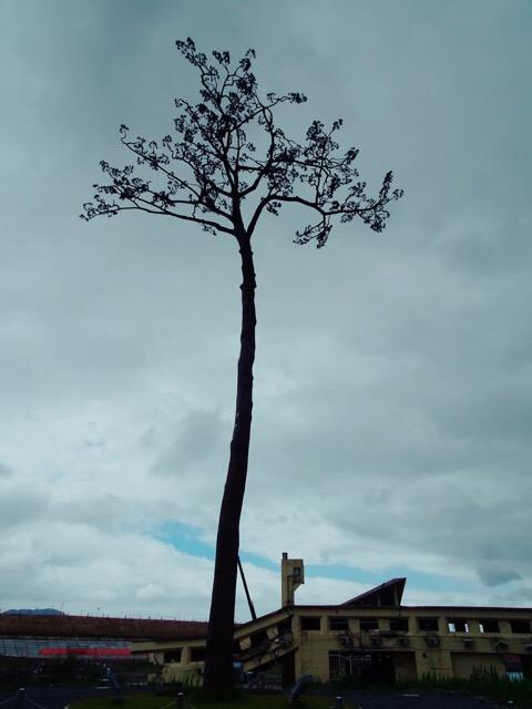 陸前高田市にある「奇跡の一本松」