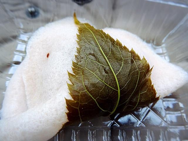 桜もち150円。上品なお味でゆっくりいただきたい!
