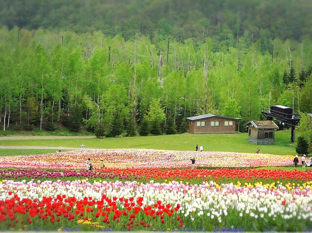 春には一面のチューリップ。季節とりどりの花と景色が楽しめる