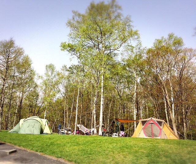 ブナ林に囲まれたキャンプ場は気持ちがいい!