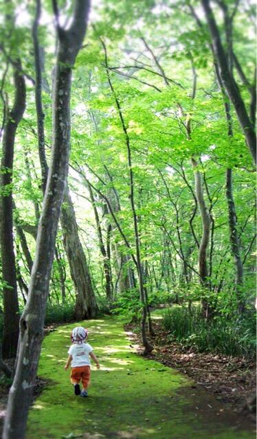 新緑に包まれた洞爺湖畔の遊歩道が気持ちいい。