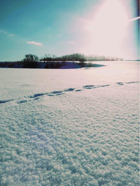 新雪はとくにまぶしい!反射している紫外線の量もすごい!