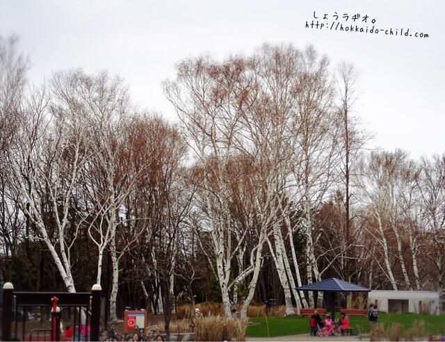 遊び場は木々に囲まれています