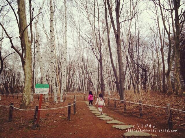 白樺の林を抜けて、遊び場へ…