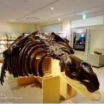 札幌市博物館活動センターは入場無料!自由研究のテーマ探しにもおすすめ
