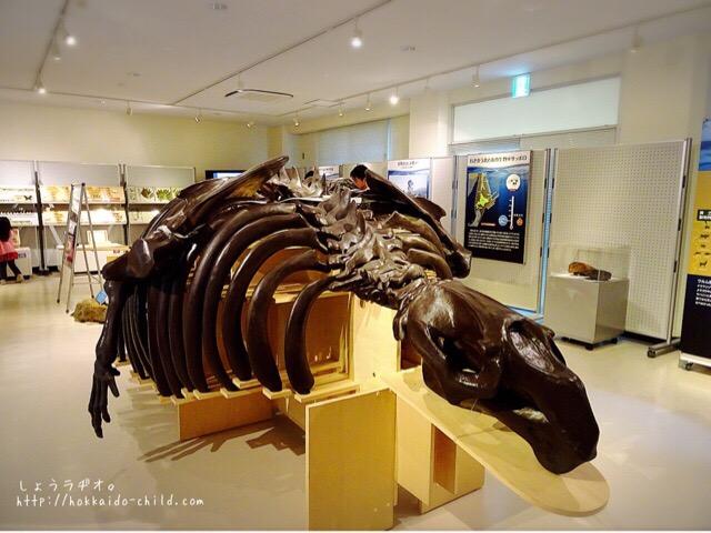 サッポロカイギュウの化石