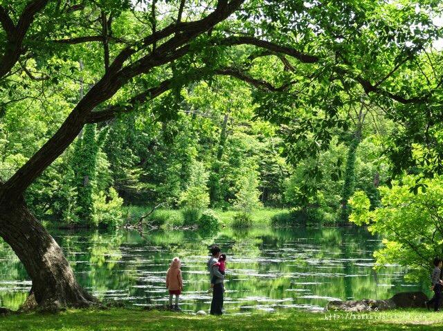 鳥沼公園をお散歩