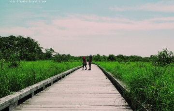 釧路湿原を歩く!