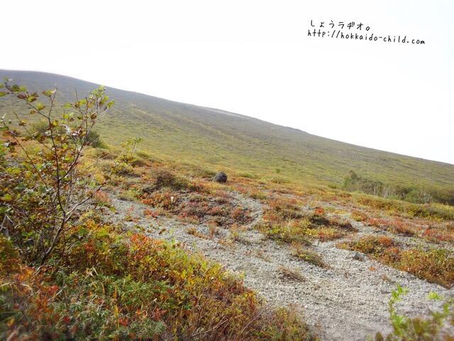 色づき始めた山の斜面