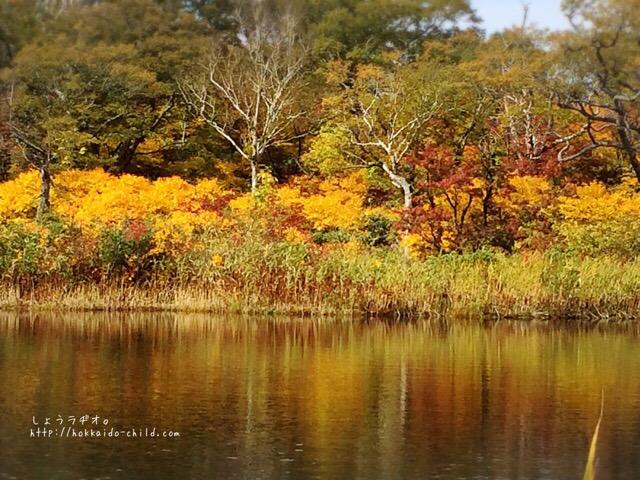 鏡沼の反対側。黄色く彩られています