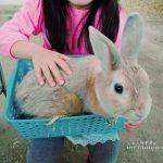 アースドリーム角山牧場は手軽に動物とふれあえる場所!ウサギを抱っこ、動物パレードやえさやり体験なども!|札幌近郊・江別市