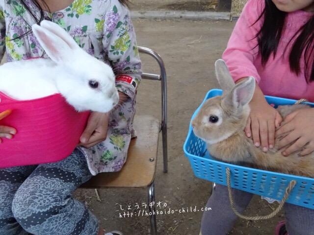 動物と触れ合ったり(ウサギさんかわいい!)