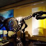 北海道大学総合博物館がリニューアル!入館無料!観光や子どもと一緒に訪れたい施設 札幌市