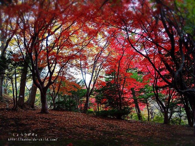 紅葉がきれい!