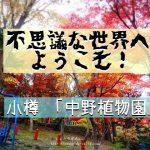 小樽の「中野植物園」はレトロな遊具がある不思議スポット。美しい紅葉も!