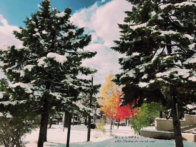 真っ白な雪の中に鮮やかな黄色と赤。