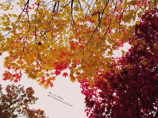 紅葉の季節はとてもきれい!