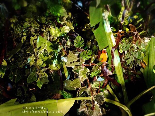 熱帯雨林のエリア