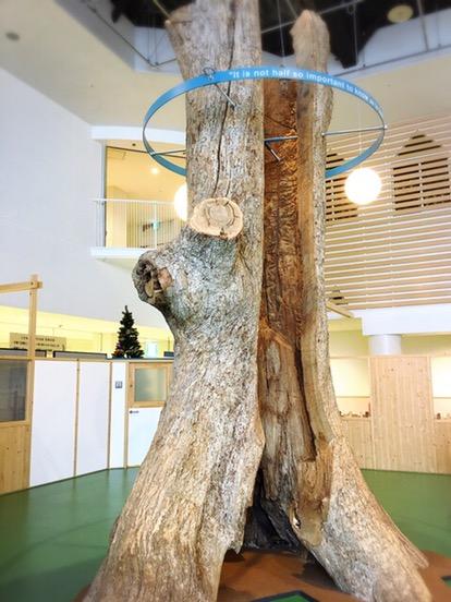 本物の木がシンボル
