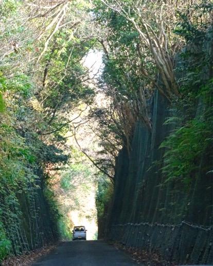 自然の美しい緑のトンネル!
