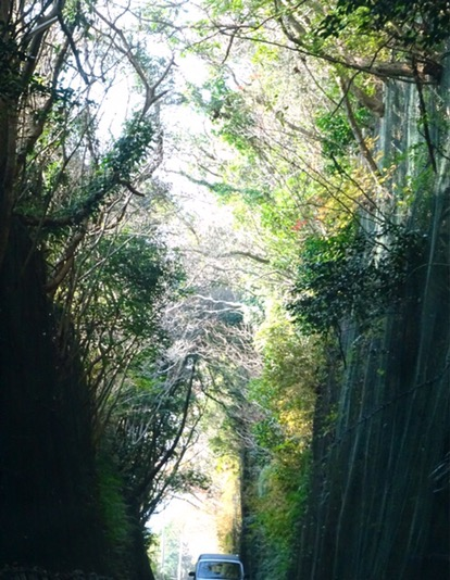 緑のトンネル。新緑の季節にはより美しいでしょう