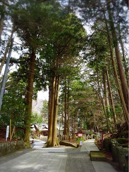 木々が立ち並び雰囲気があります