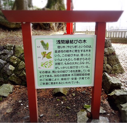 浅間縁結びの木