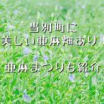 当別町の亜麻畑を紹介!かれんな薄紫色の花畑を見にいこう。亜麻まつりも開催