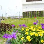 【そらのガーデン】は子連れ休憩にもぴったり!札幌駅隣接ビル「エスタ」の屋上庭園の紹介!