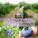 季節限定!「ブルーベリーさっぽろ」で甘くて大粒のブルーベリーを頬張ろう!幼児は食べ放題200円!