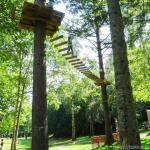 【富良野】ツリートレッキングを親子で体験!木の上を歩くスリル満点のアスレチック