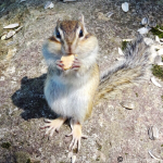 小樽天狗山「シマリス公園」は入園無料!可愛いリスにエサをあげよう