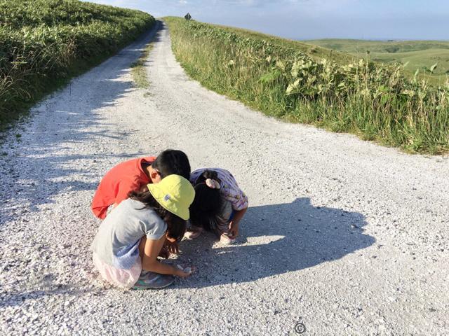 白い道で貝殻拾い