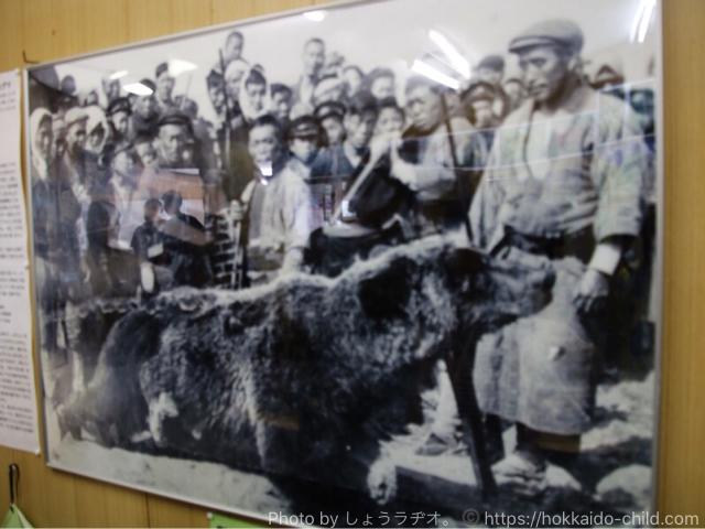 利尻島に熊が上陸