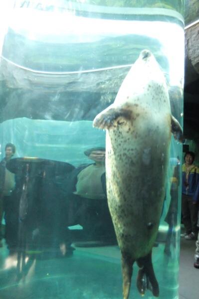 旭山動物園のアザラシ