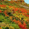 「赤岳銀泉台」で日本一早い紅葉を!マイカー規制中のアクセス方法や注意点を紹介! 親子でトレッキングを楽しもう!